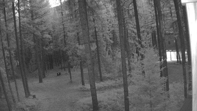 time-lapse frame, Cabin webcam