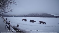 """view from Webcam Cansiglio - verso la piana dei """"Bech"""" on 2021-01-24"""